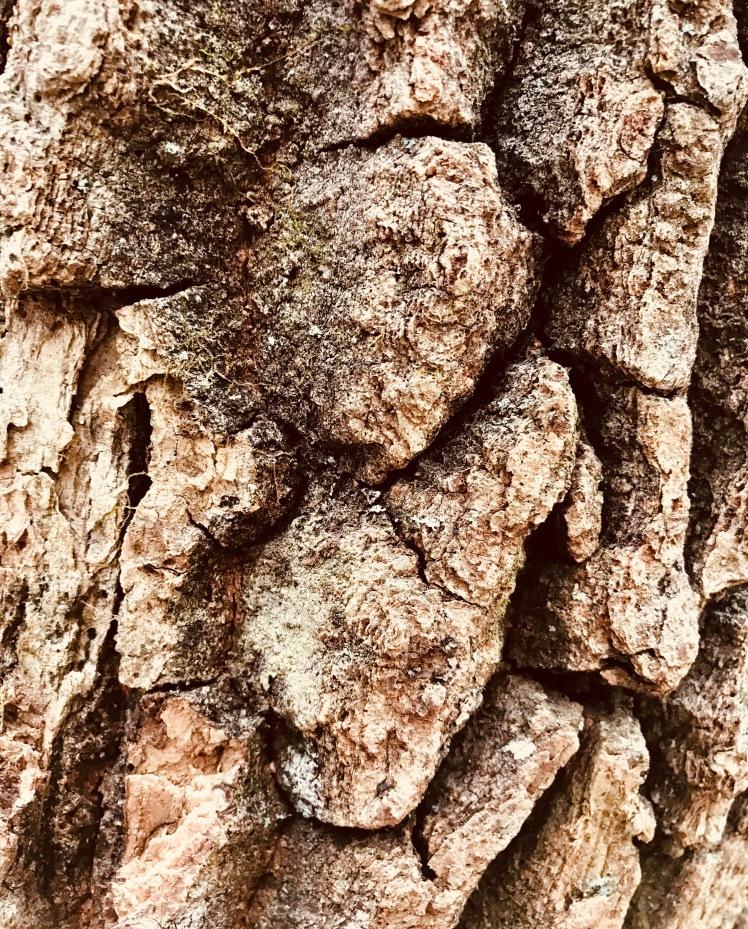 Hawksbill Mountain Trail - bark