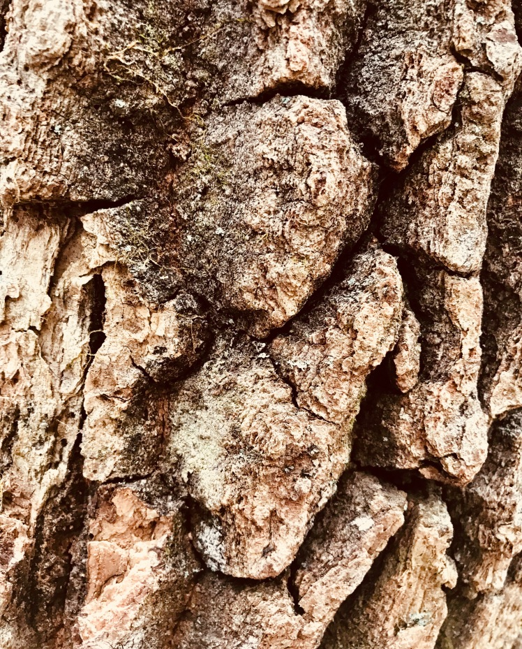 Hawksbill Mountain Trail - bark