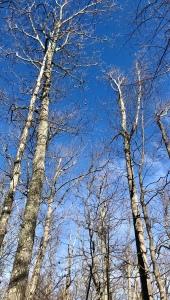 Jonas Ridge Trail - trees