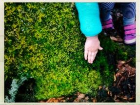 Green Knob Trail