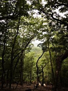 Marrow Mountain State Park - trees