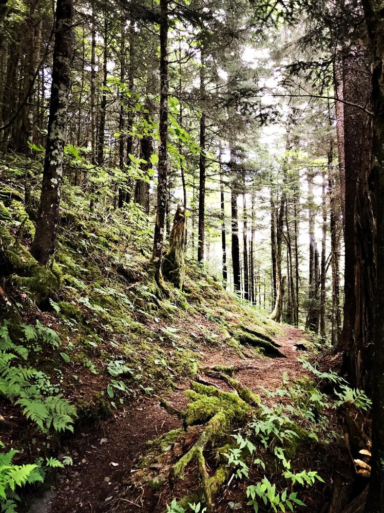 Balsam Mountain Trial - trail