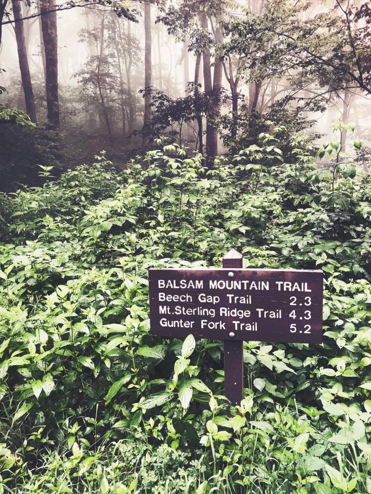 Balsam Mountain Trial - trailhead