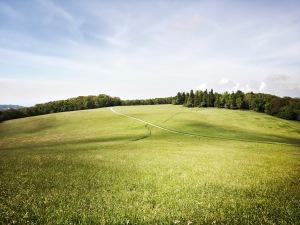 Flat Top Mountain Trail - field