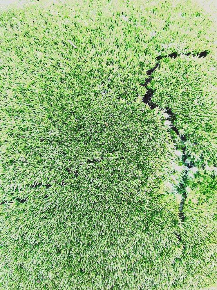 Lake Jame State Park - moss