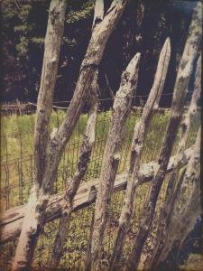 Stone Mountain State Park - garden fence