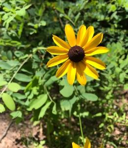 Barnett Knob - flower
