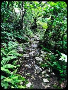 Camp Creek Bald - Appalchian Trail