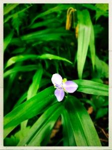 Green Knob Lookout - flower