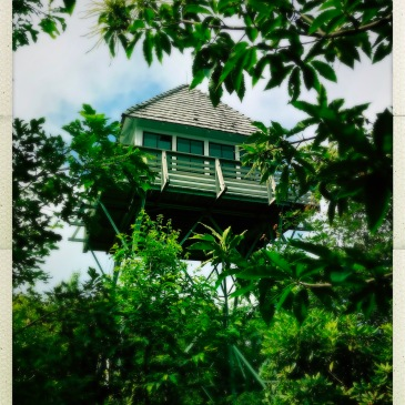 Green Knob Lookout - tower
