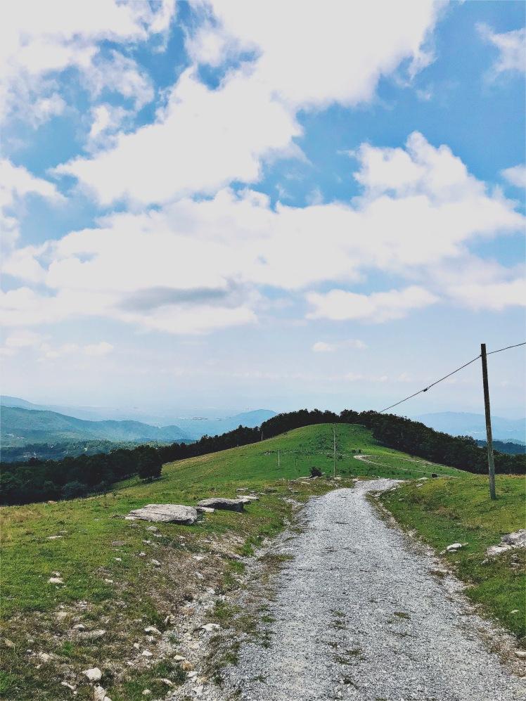 Bearwallow Mountain - field