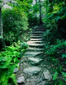 Bearwallow Mountain Trail - steps