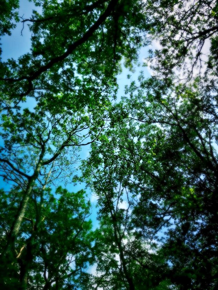 Bearwallow Mountain Trail - trees
