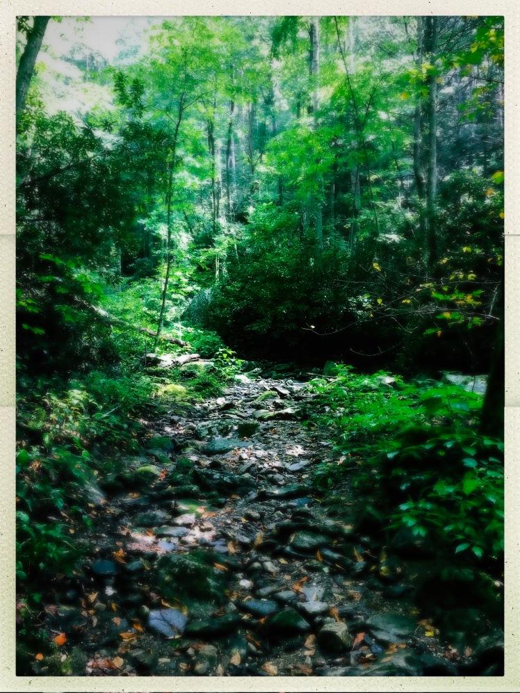 China Creek Trail - creek bed