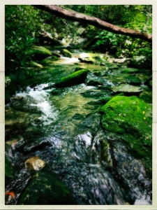 China Creek Trail - creek