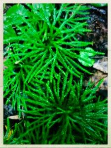 China Creek Trail - moss