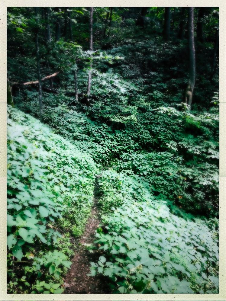China Creek Trail - stinging nettle