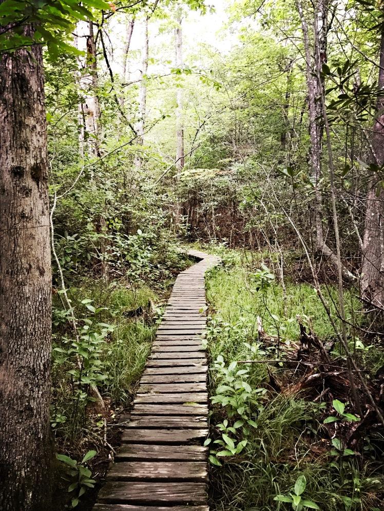 Moore's Knob Loop Trail - walkway