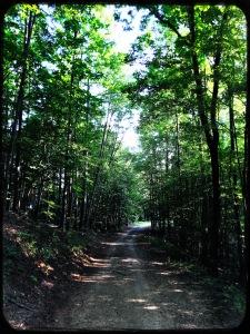 Rendezvous Mountain State Forest - Mountain Ridge Trail - path