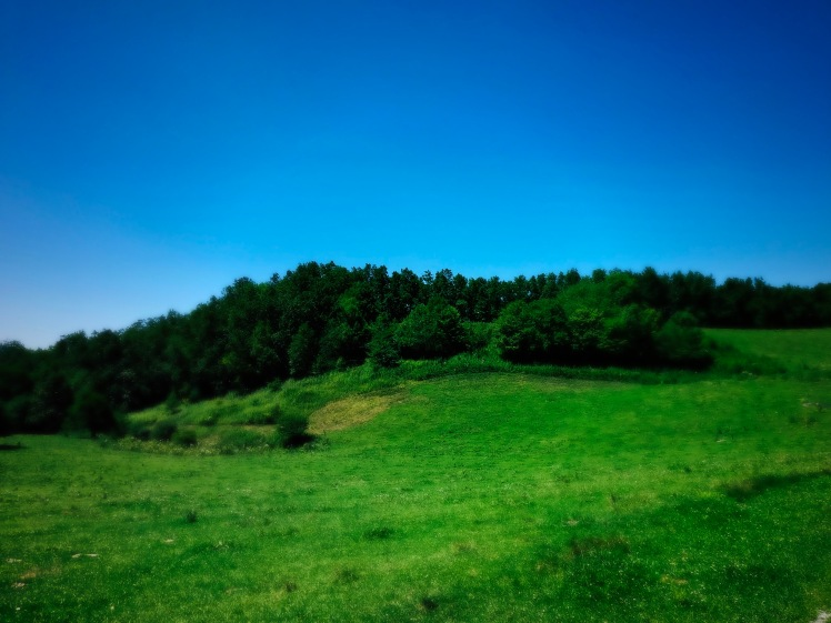 Rich Mountain Trail - field