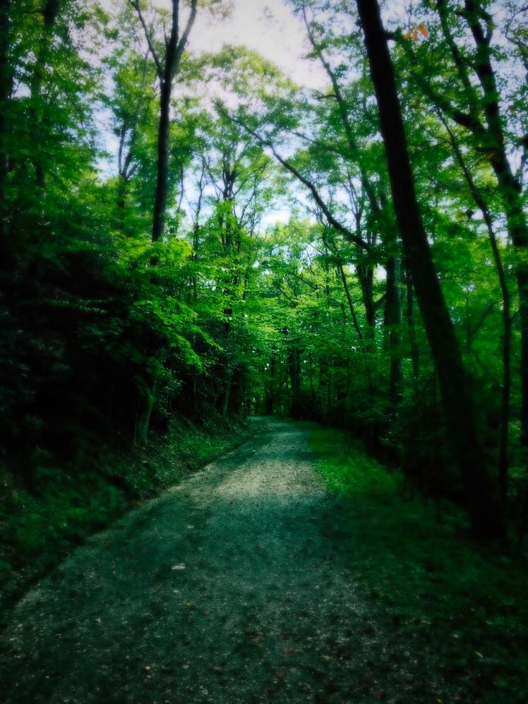 Rich Mountain Trail - path