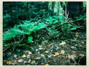 The Maze - ferns