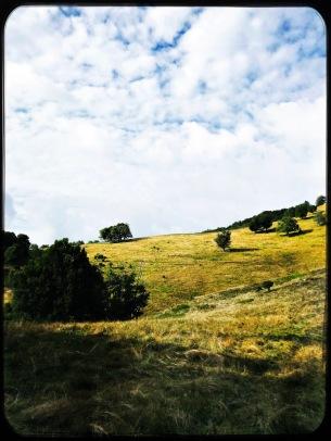 Hemphill Bald Trail
