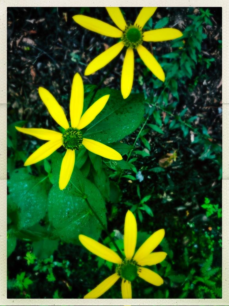 Watkin Road - flowers