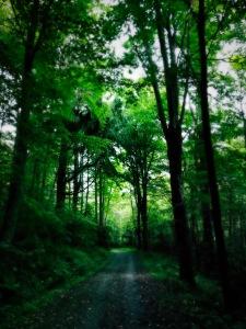 Watkin Road - trees