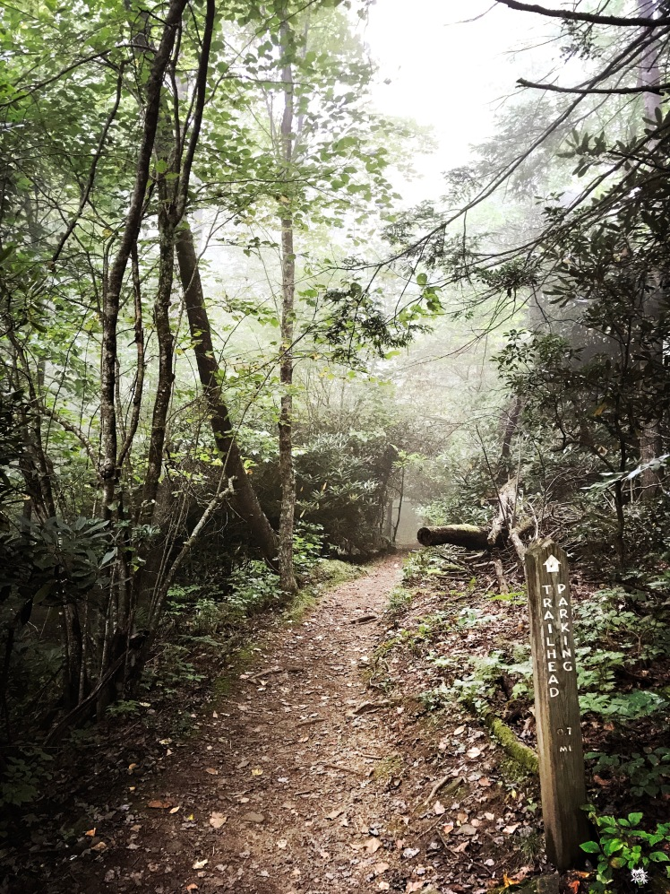 Crabtree Falls Trail - fog