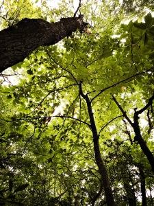 Crabtree Falls Trail - trees