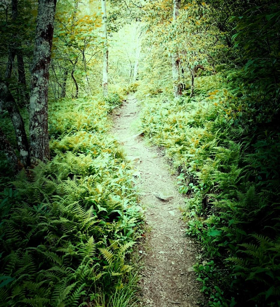 Appalachian Trail - early morning hiking