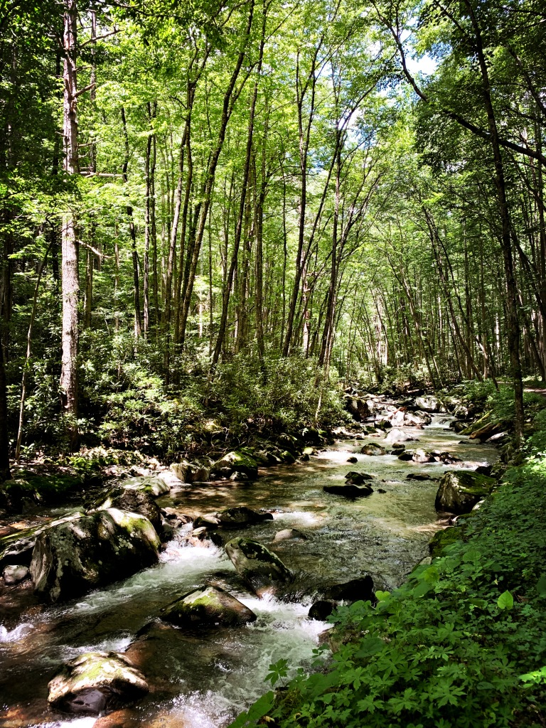 Bradley Fork Trail - creek