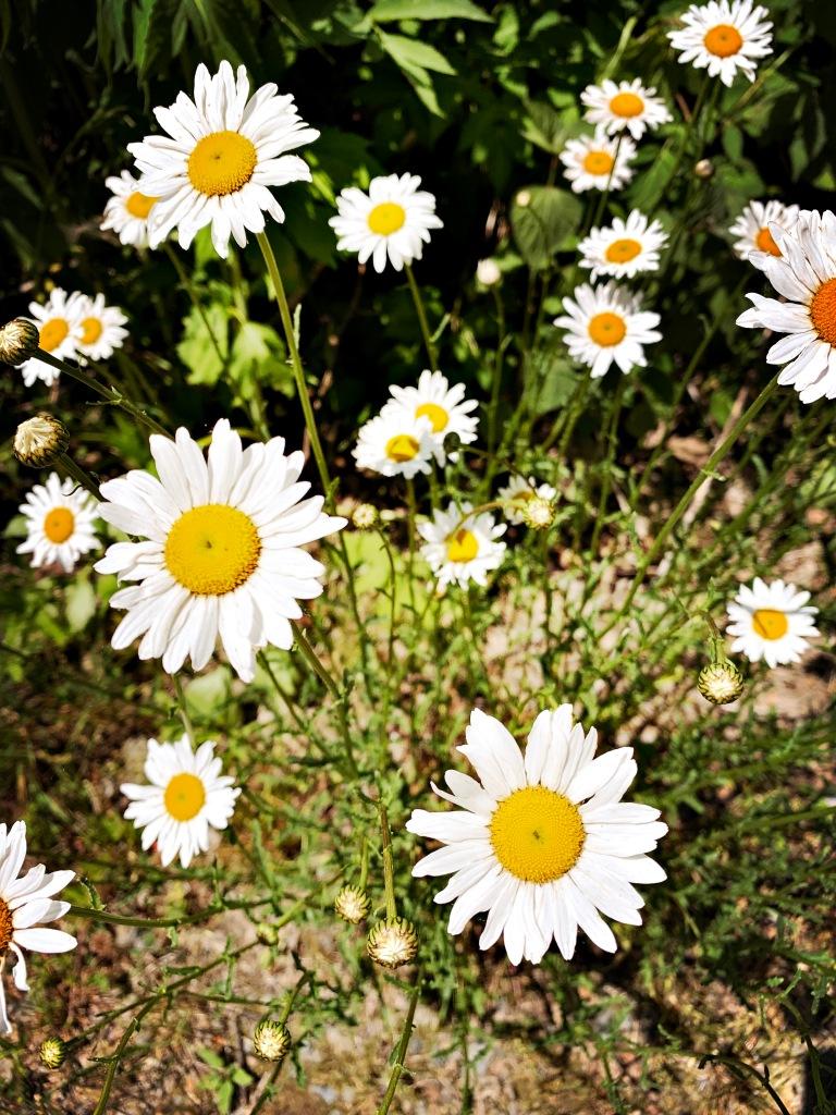 FR 85A - flowers
