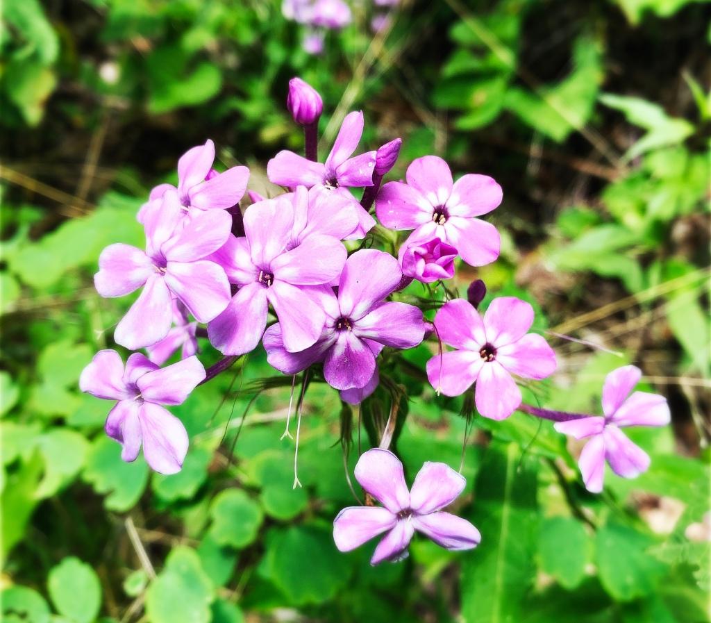 Hyatt Ridge Trail - flowers