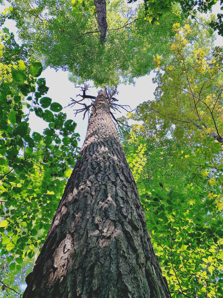 Caldwell Fork Trail - hemlock