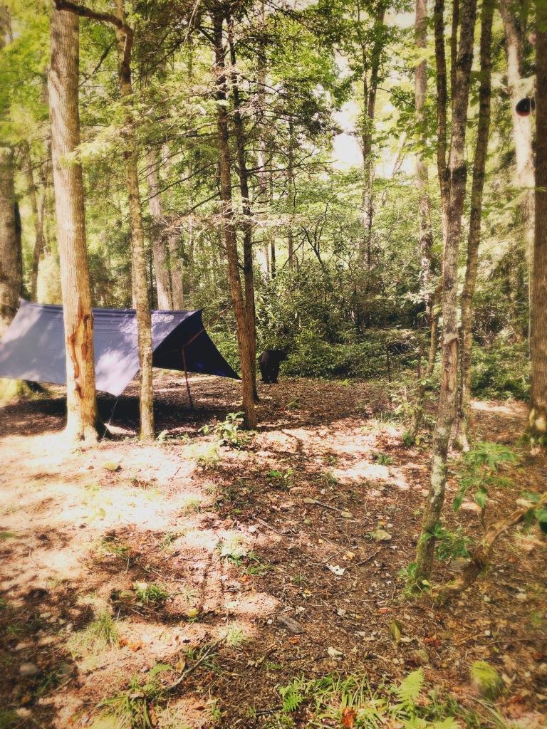 campsite #41 - bear