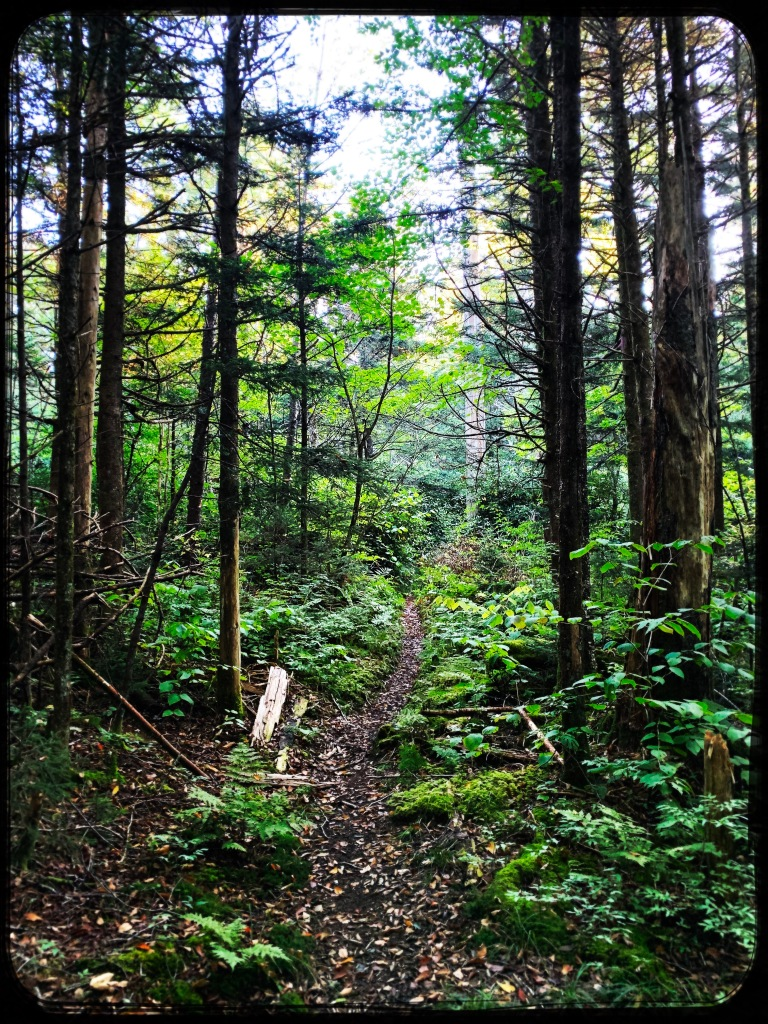 Spruce Mountain Trail - trail