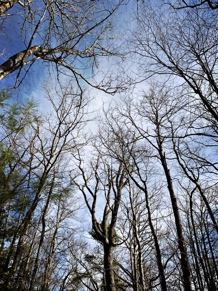 Big Lost Cove Cliffs Trail - sky and trees