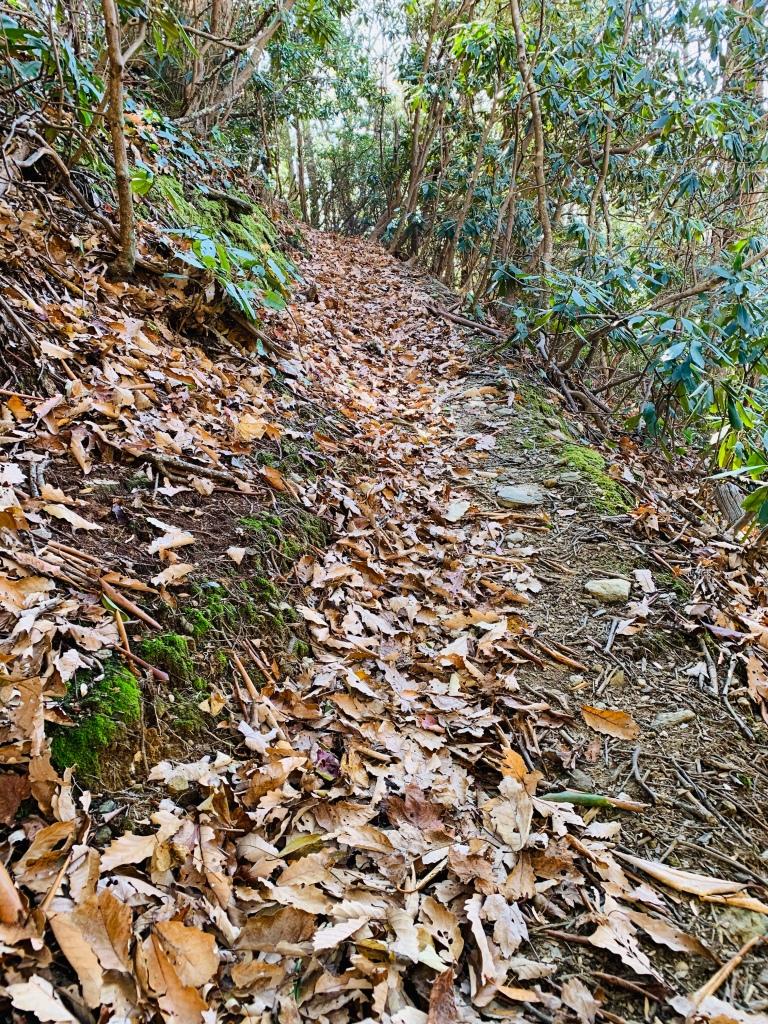 China Creek Trail - trail