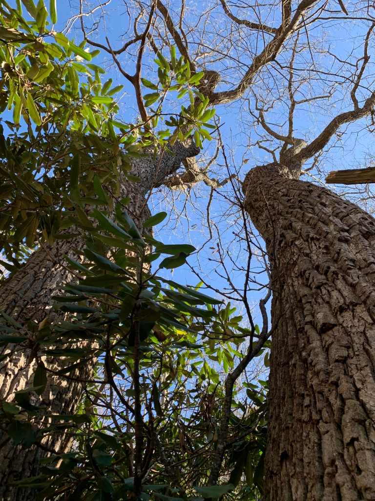 China Creek Trail - trees