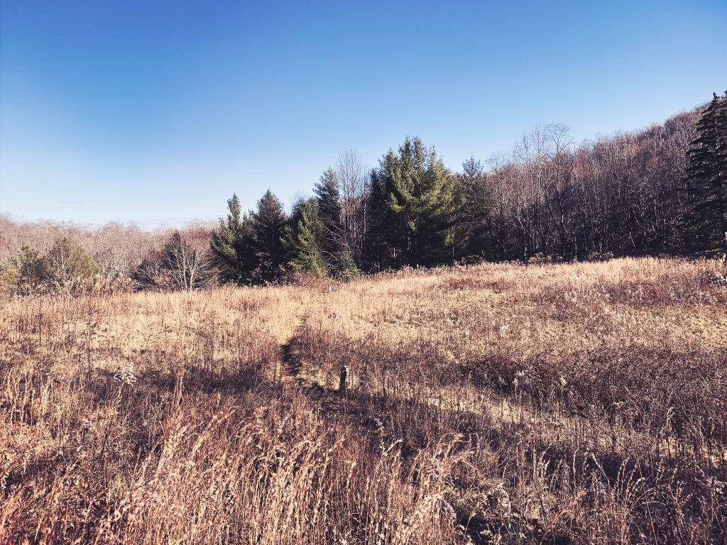 Tanawha Trail - field