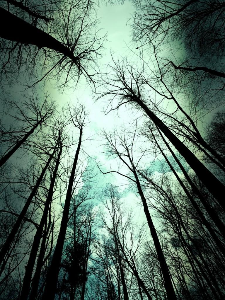 Big Fork Ridge Trail - trees