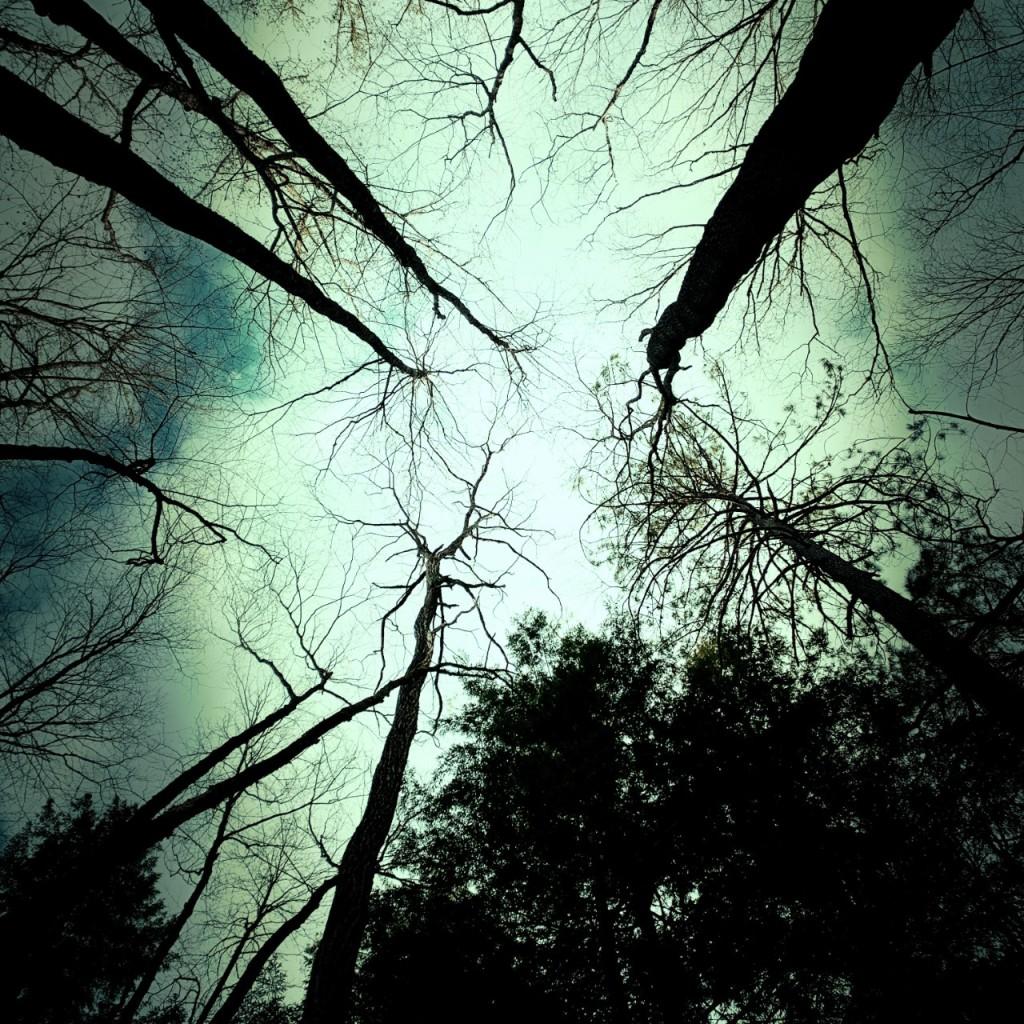 Campsite 39 - trees