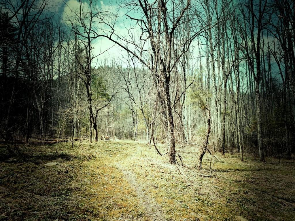 McKee Branch Trail - trail