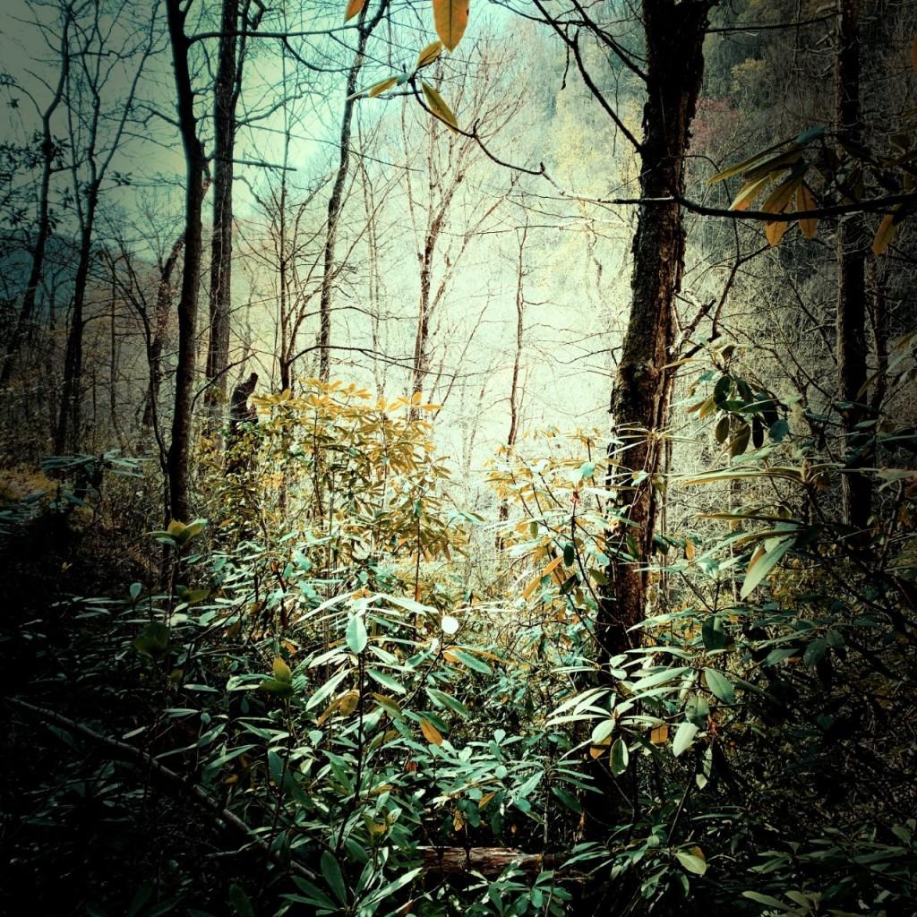 Palmer Creek Trail - forest