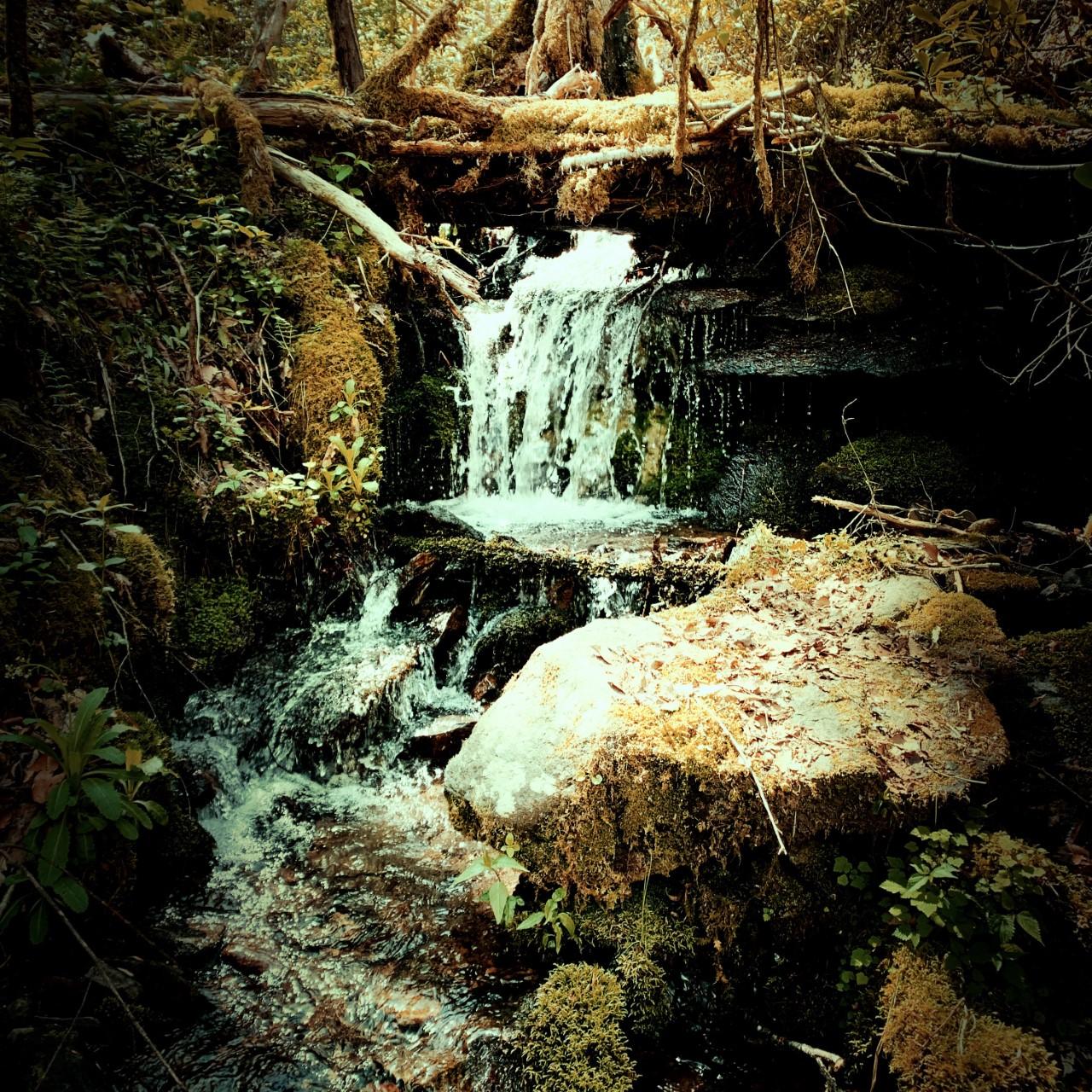 Pretty Hollow Gap Trail - creek