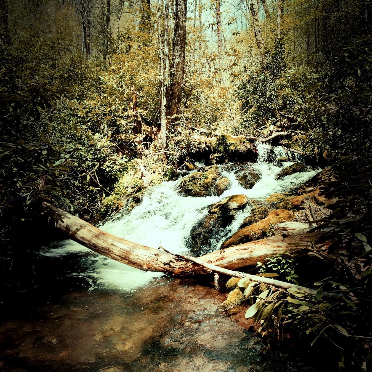 Pretty Hollow Gap Trail - Pretty Hollow Creek