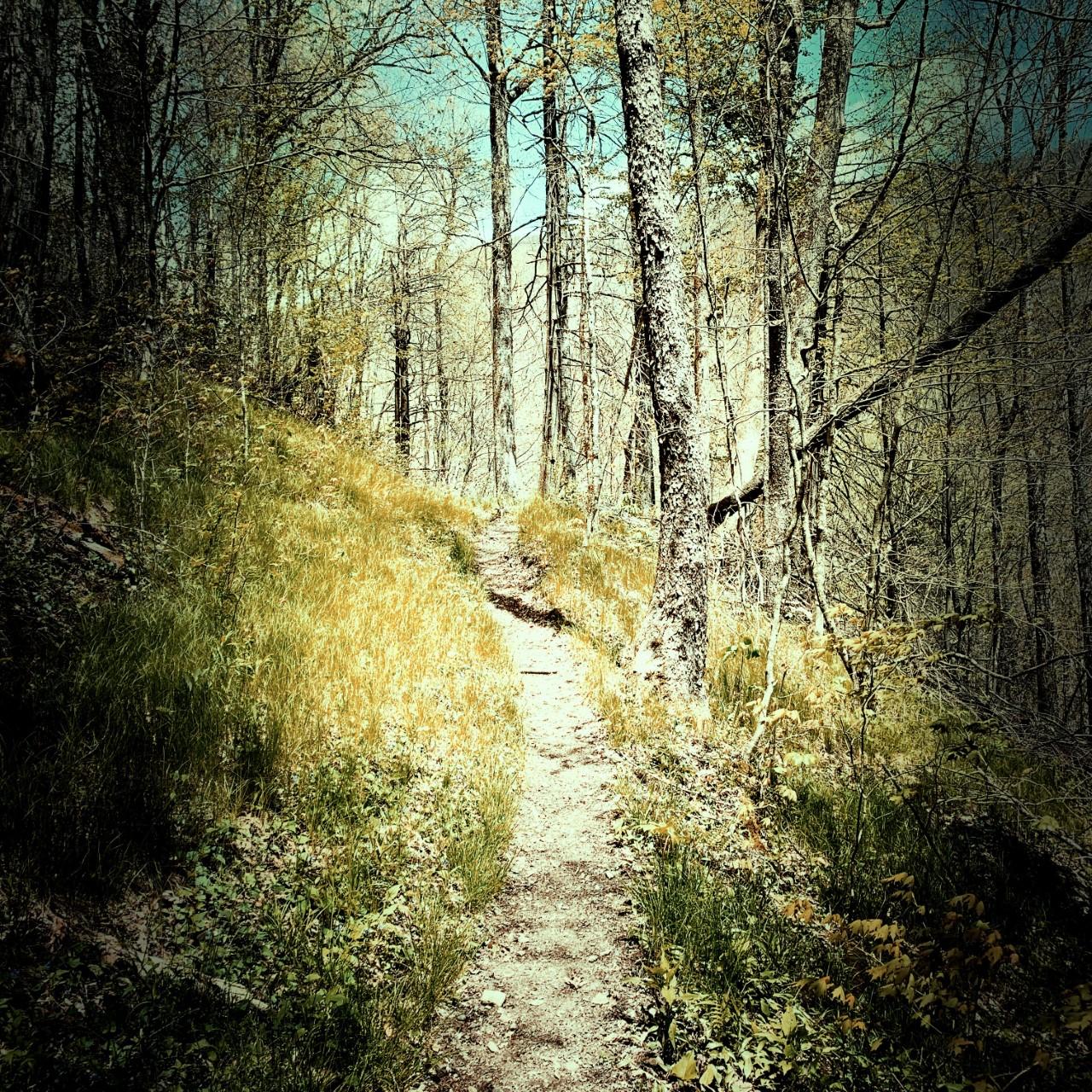 Pretty Hollow Gap Trail - trail