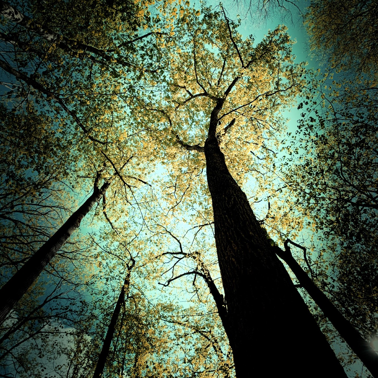 Pretty Hollow Gap Trail - trees